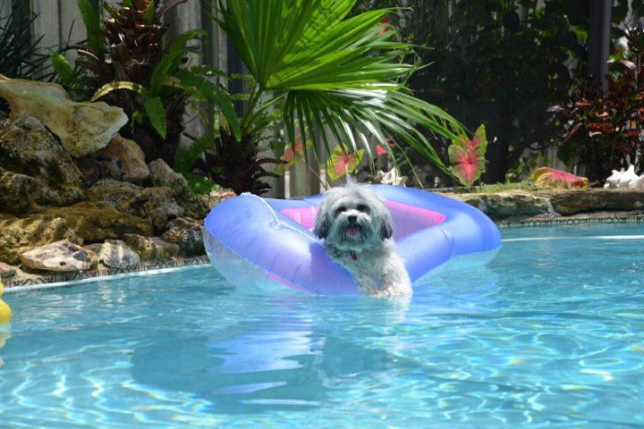 Swimming Pool with Dog